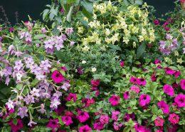 blomsterprogram1